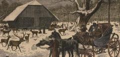 farbige Illustration, die einen Fiaker vor einer Holzhütte, umgeben von Wild, im Wald zeigt